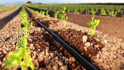 Instalación de un sistema de riego por goteo – Agriculturers.com ...
